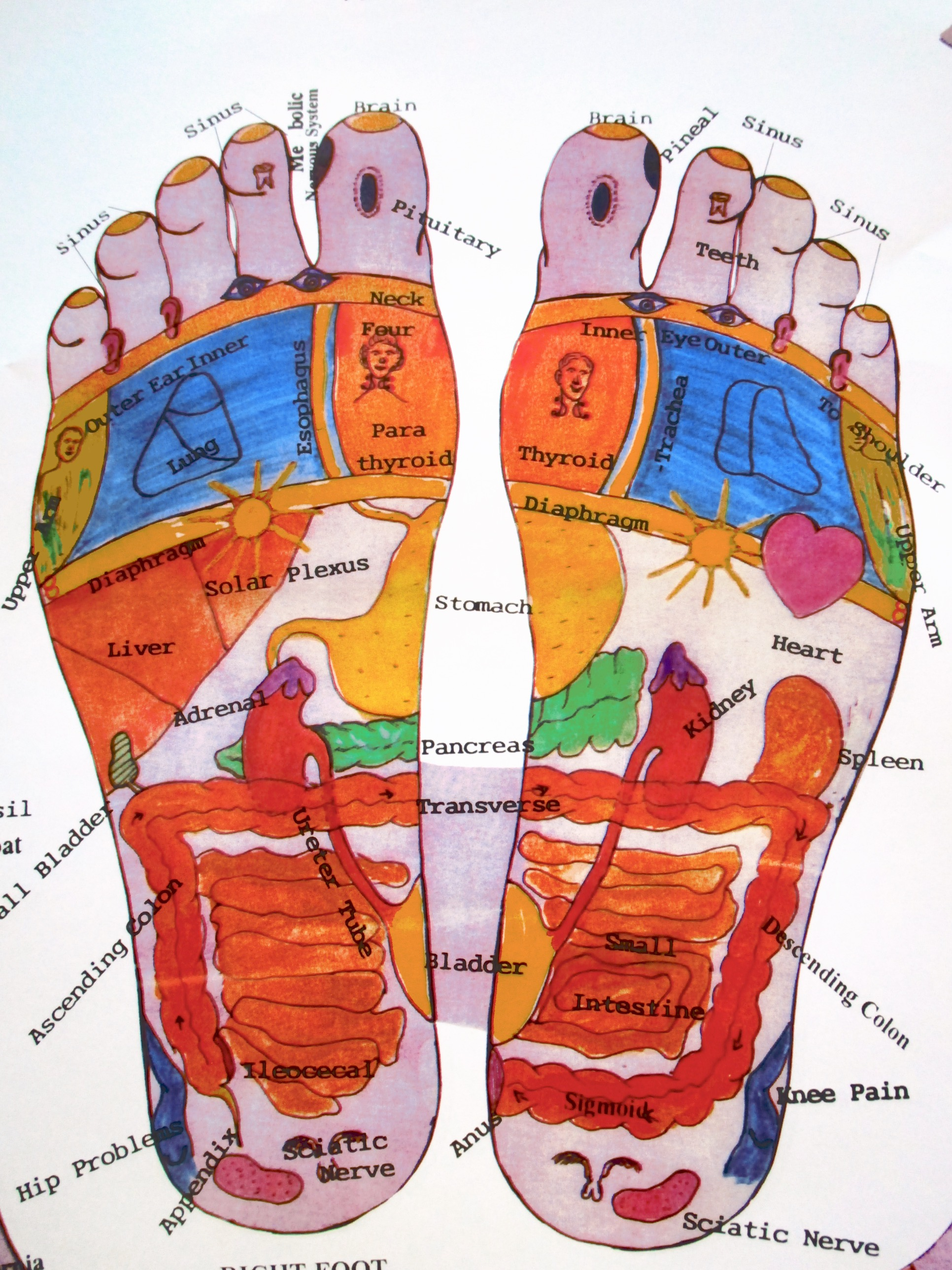 Dad Reflexology Chart 2